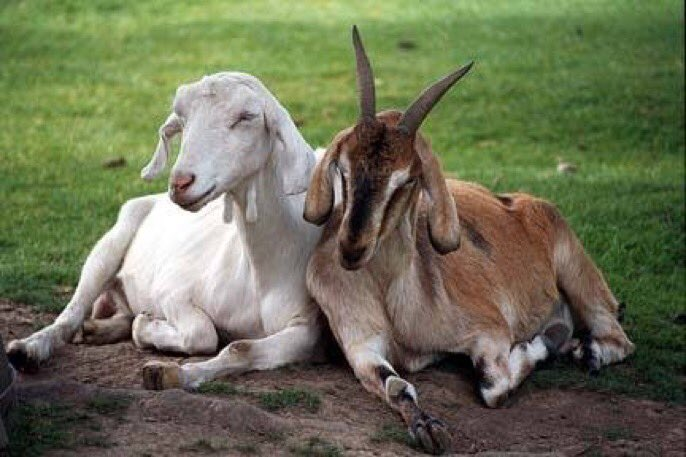 Messi and Ronaldo at the airport waiting for their flights back home.