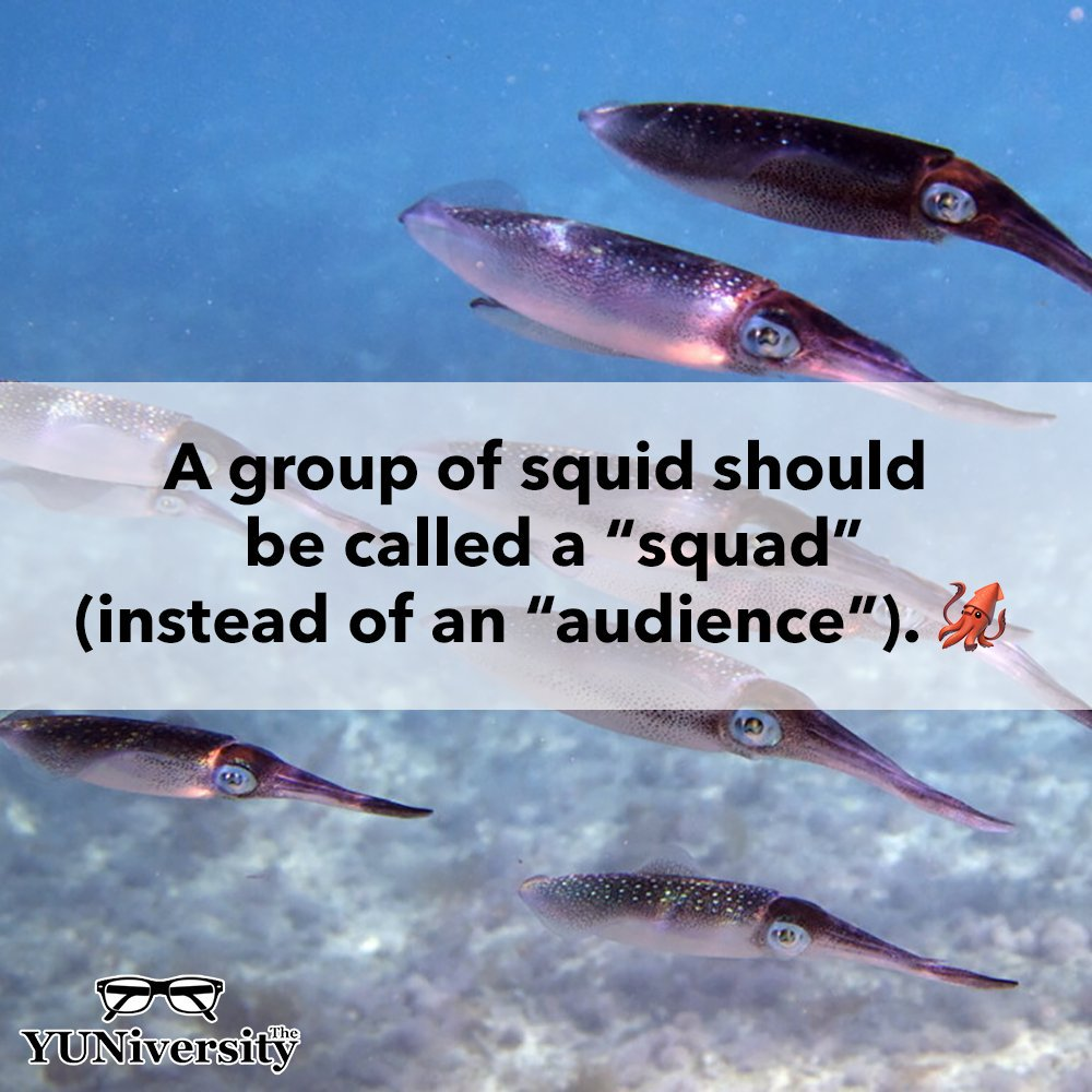 """Sadly, a group of squid is known as an """"audience,"""" not a """"squad."""" 🦑 #missedopportunity 🤦🏻"""