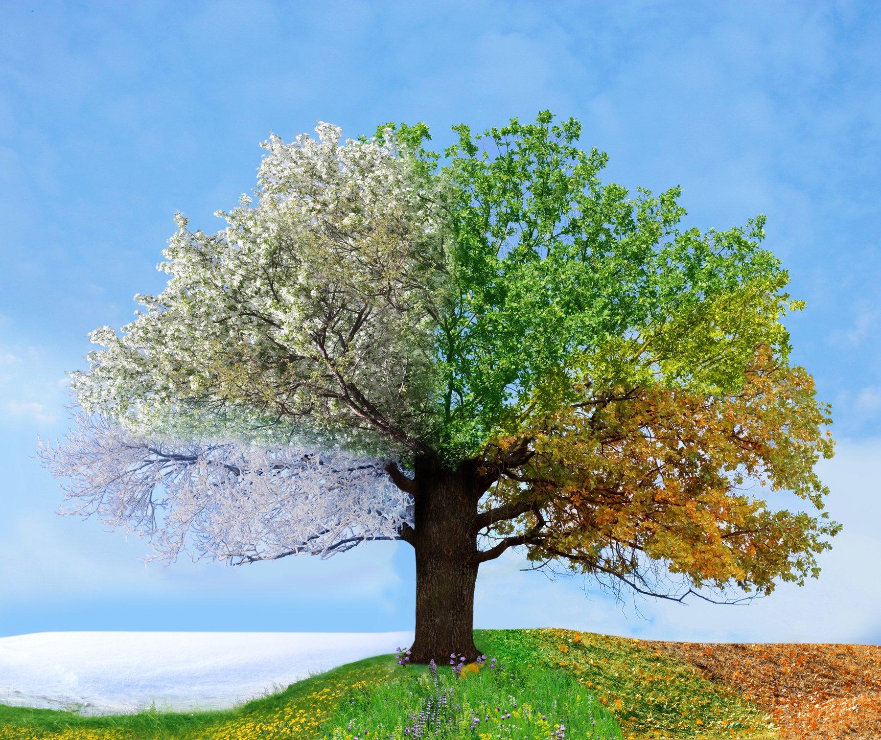 дерево зимой летом на одной картинке стих