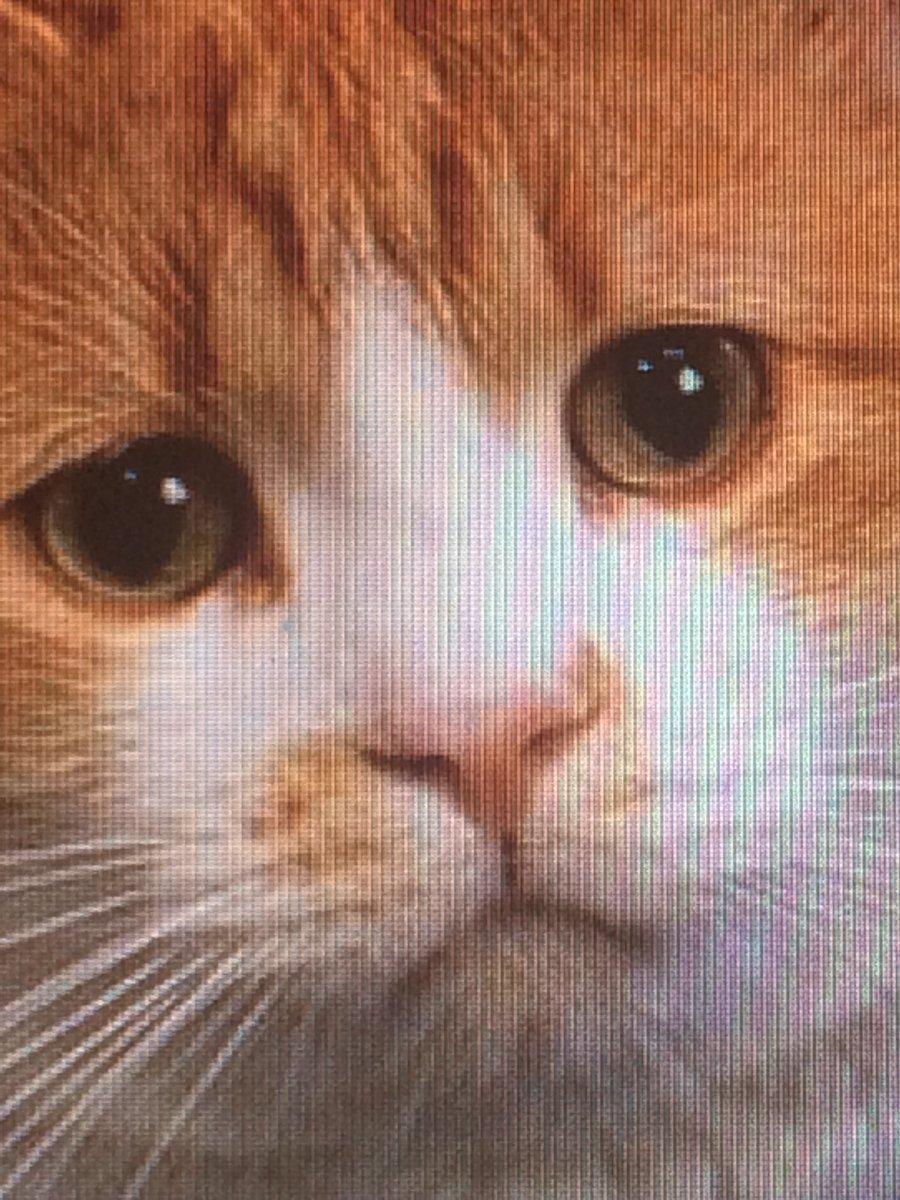 Плачущий кот картинка