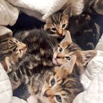 Image for the Tweet beginning: DUMPED: five kittens have been