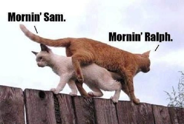 Image result for morning sam morning ralph