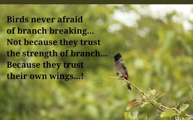 #TuesdayThoughts #motivational Self believe is most important things in life. Birds never afraid of branch Not because they trust the strength of branch .. Because they trust their own Photo