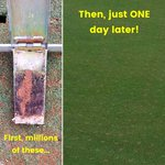 Image for the Tweet beginning: #DryJect can save public courses
