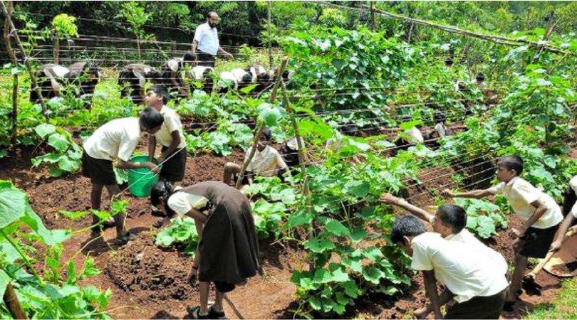 यह सरकारी स्कूल अपनी बंजर ज़मीन में खेती कर, हर साल कमा रहा है 4 लाख रूपये! hindi.thebetterindia.com/?p=5291