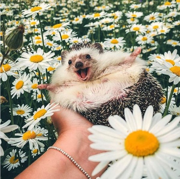 May you smile thiiiiiiiiiiis big today! #MrPokeeTheHedgehog ������ https://t.co/FoHq2wvk3e