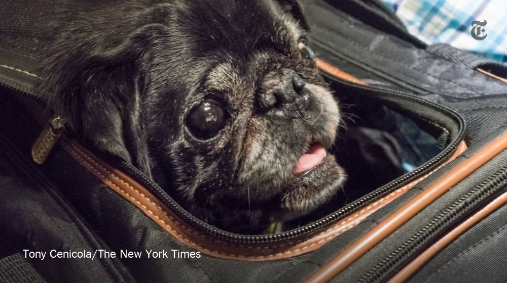 Why train travel is a good way to go when you're bringing your dog along https://t.co/PtJtDycFKN https://t.co/ETxbpQBMCG