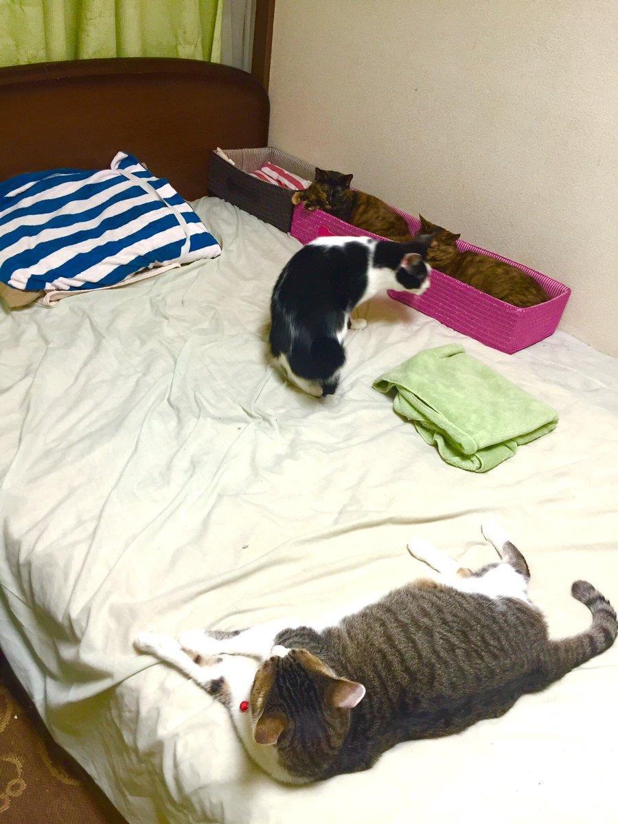 猫さまのにベッドを占拠されるとお困りの貴方に! 区画整理事業を!