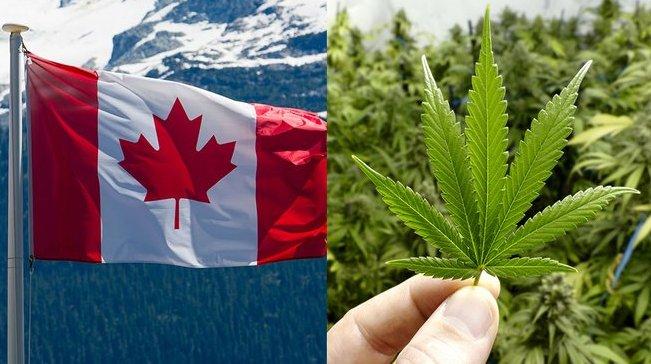 Canada legalises recreational marijuana after a landmark law passes the Senate. #TenNews Photo