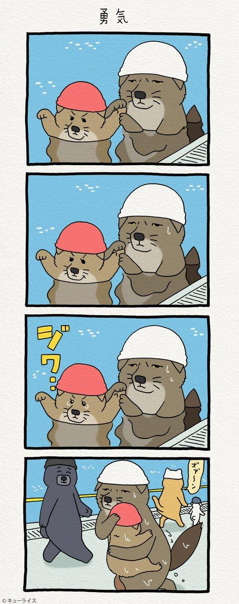 水に…顔を…。チベットスナギツネの砂岡さん「勇気」/Practice to put a face to the water