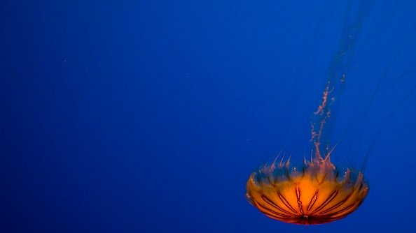 Here's exactly what to do if you get stung by a jellyfish https://t.co/d8dp9Yu23D