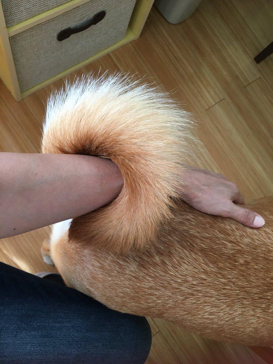 身体よりシッポの毛の方が長い 草太です❣️ 普通 そうだっけ⁉️  (* ´ ェ `*)♥