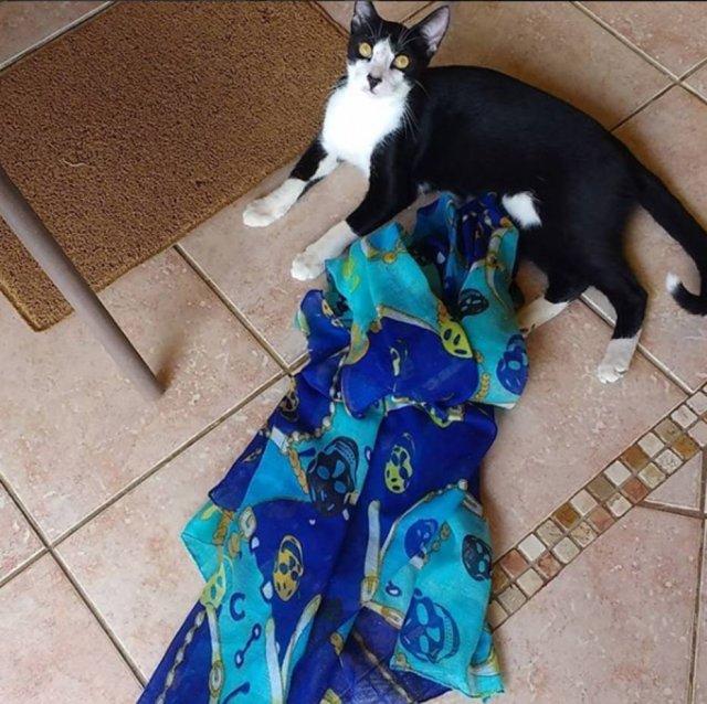 >@Emais_Estadao Dona de gato cleptomaníaco cria perfil para devolver itens furtados https://t.co/vMhbQvhPeF