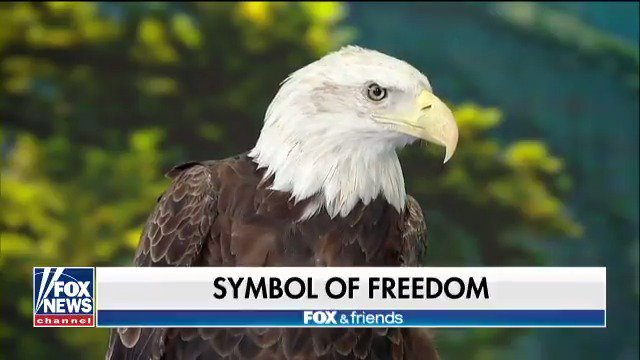 Celebrating American Eagle Day @foxandfriends https://t.co/sGhb5mKap9