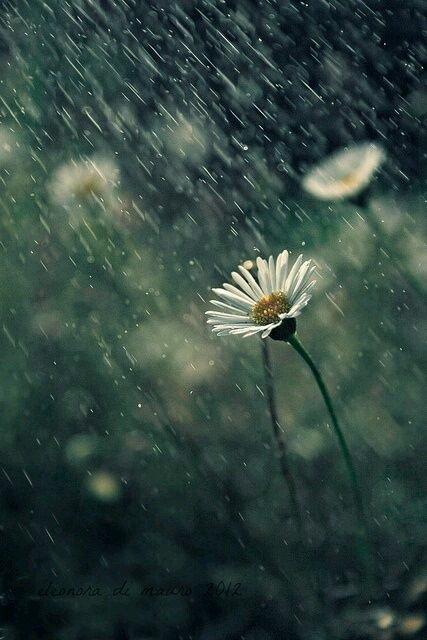 Temporale: le nubi, spaventate dai tuoni, scoppiano a piangere.Roberto Gervaso#Frasiecolori #VentagliDiParole  - Ukustom