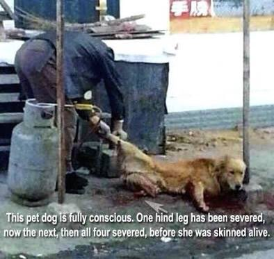 #China #XiJinping Are A Black #Shame  Of #MotherEarth And #Hell's #Hole For #All #Animals #No #AnimalWelfareLaws WHEN ? Are This #SAVAGE #Nation #Become #Human ? #STOP #DogMeatTrade #DogCatMeatTrade  #AnimalRights #NOW #AnimalWelfareLaws #NOW #BAN #YULIN #NOW  <br>http://pic.twitter.com/PIHs0cF1p5