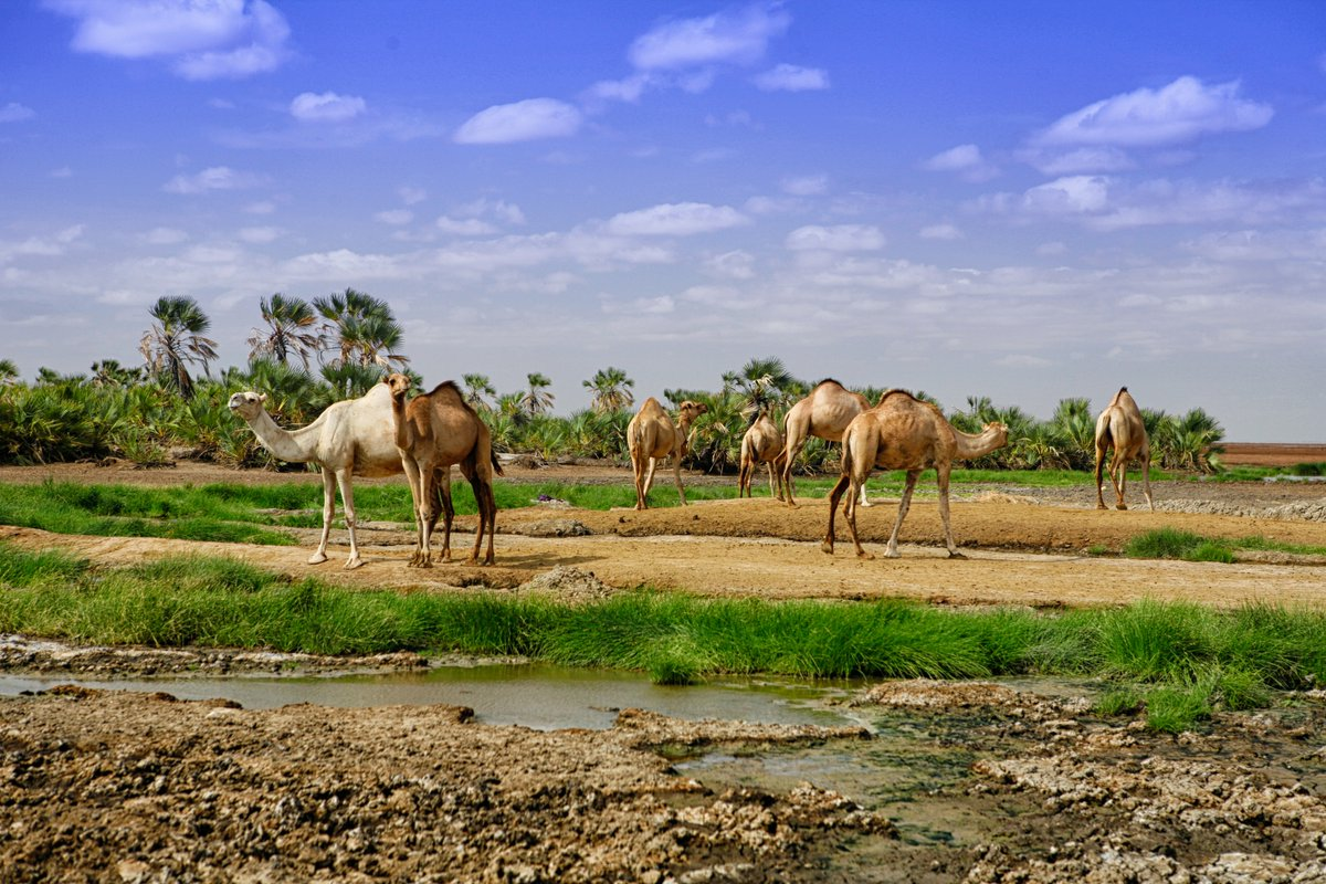 Image result for chalbi desert from above