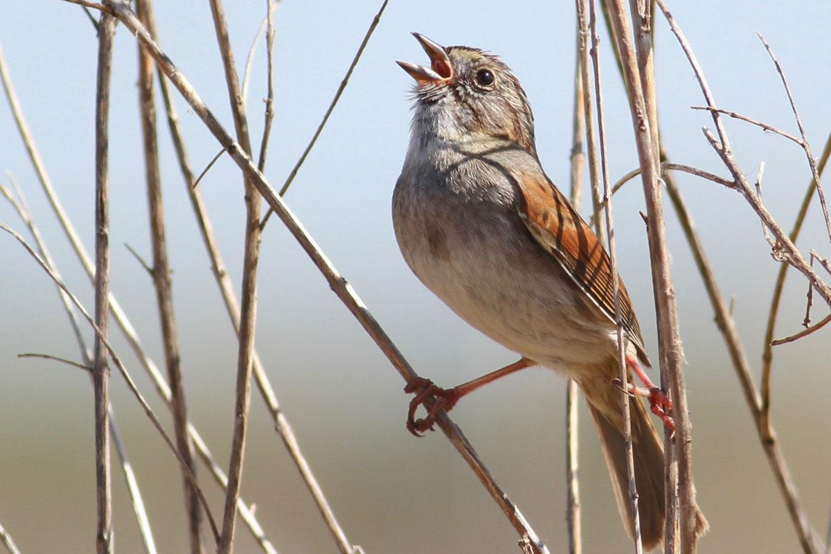 The New York bird with a song that may be a thousand years old https://t.co/YcUDJpeu2s https://t.co/9AxaQAvD7Q