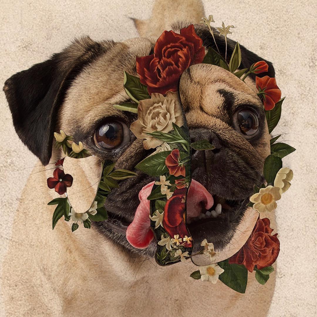 """It isn't in my pug @shawnmendes"" - @itsdougthepug"