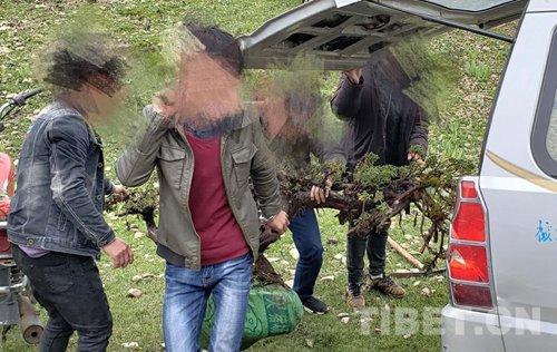 #Contea di #Yajiang, #prefettura di #Ganzi, #provincia del #Sichuan focalizzata sulla #lotta alle #attività #illegali nella distruzione delle #risorse #ecologiche  - Ukustom
