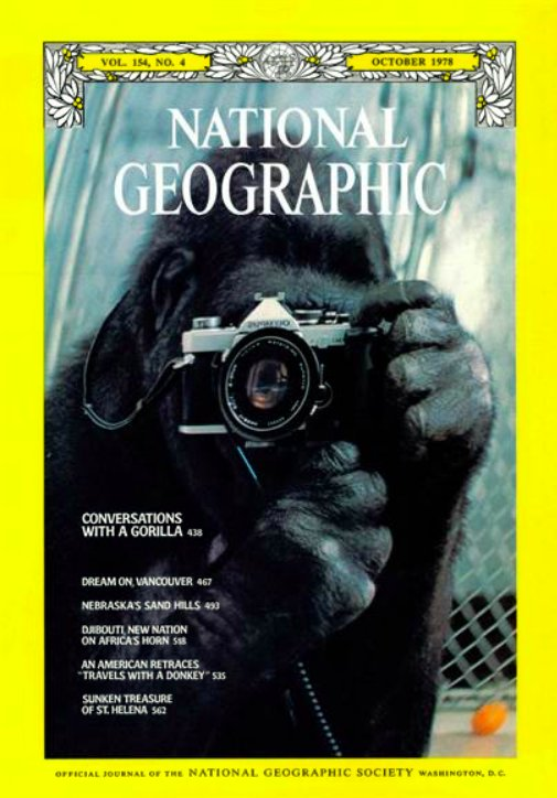 Koko the gorilla, who appeared on our cover, could chat, tease, and even argue with scientists using sign language. She has died at the age of 46.