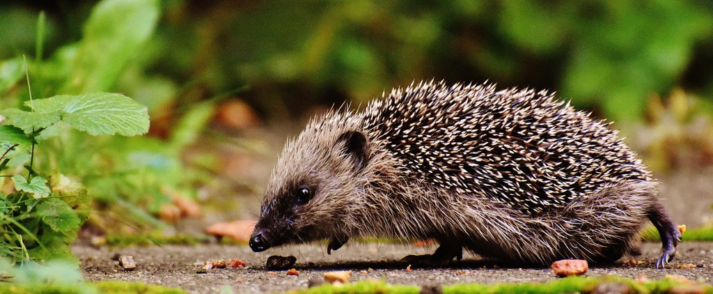 test Twitter Media - The intensive use of #pesticides has, in part, caused a huge decline in #hedgehog numbers in Britain. #Biodynamic gardening is inherently #wildlife friendly, giving space to these amazing creatures https://t.co/6BOBE5uKj4 https://t.co/Qzgelv64Pd