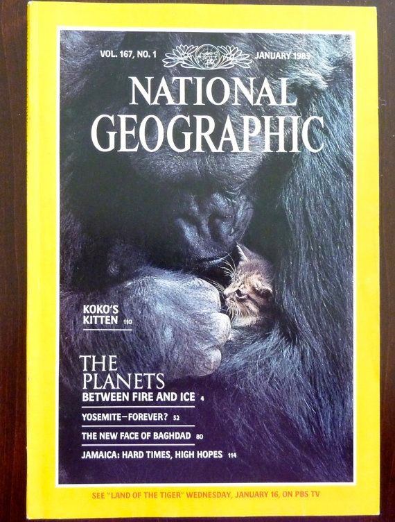 Koko, the gorilla known for sign language, has passed away at the age of 46. Here she is on the cover of the 1985 National Geographic. #RIPKoko 🦍