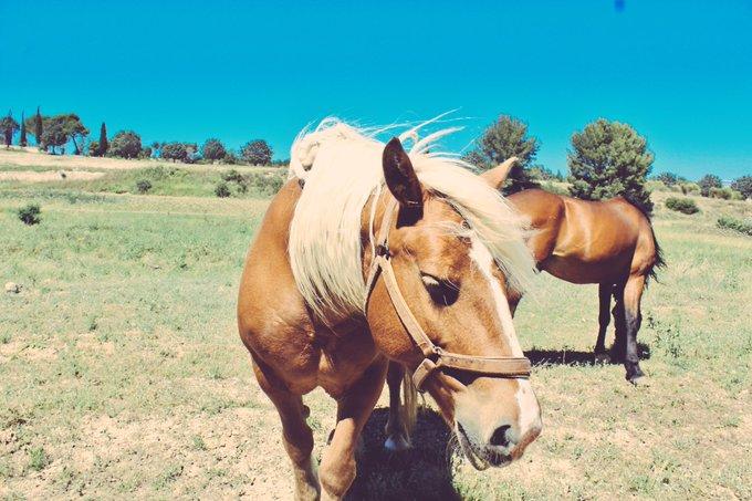 Enfin #JeudiPhoto pour vous montrer la photo que j'ai faite la semaine dernière ! Les deux chevaux 🐎 sont adorables et superbes ! Photo