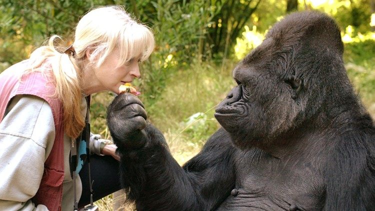 Koko, the gorilla who knew sign language, dies at 46 https://t.co/KwKnMUGrLA