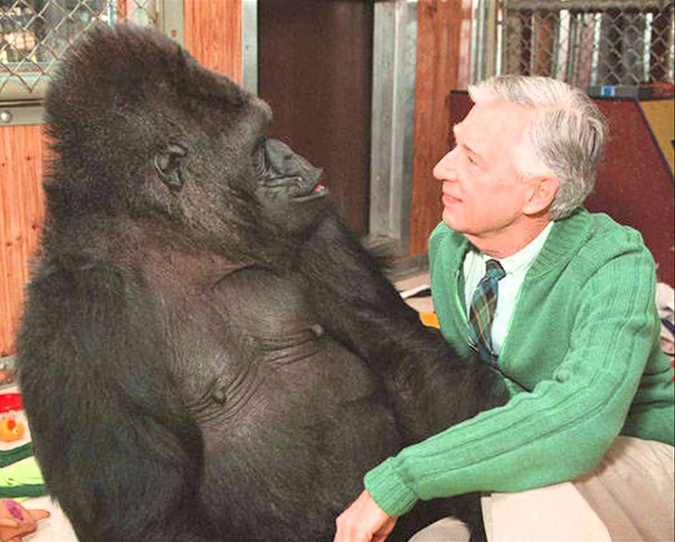 Oh no, Koko died. Koko and Mr. Rogers are some of the greatest photos of our time. RIP https://t.co/aXhTdn6b31 https://t.co/95RwuHYars