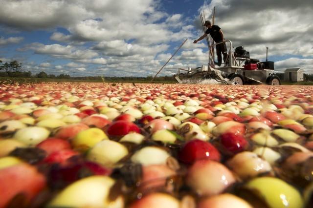 Double whammy: U.S. pork, fruit producers brace for second wave of Chinese tariffs https://t.co/45sai8v8cB https://t.co/u2f14afx9O