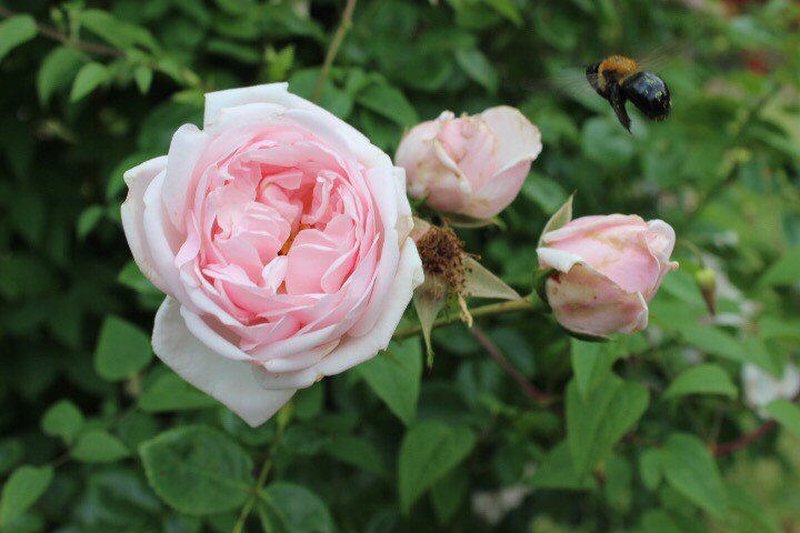Our own Lidane Noronha shared some bee pictures from her weekend in NYC....Thanks Lidane.