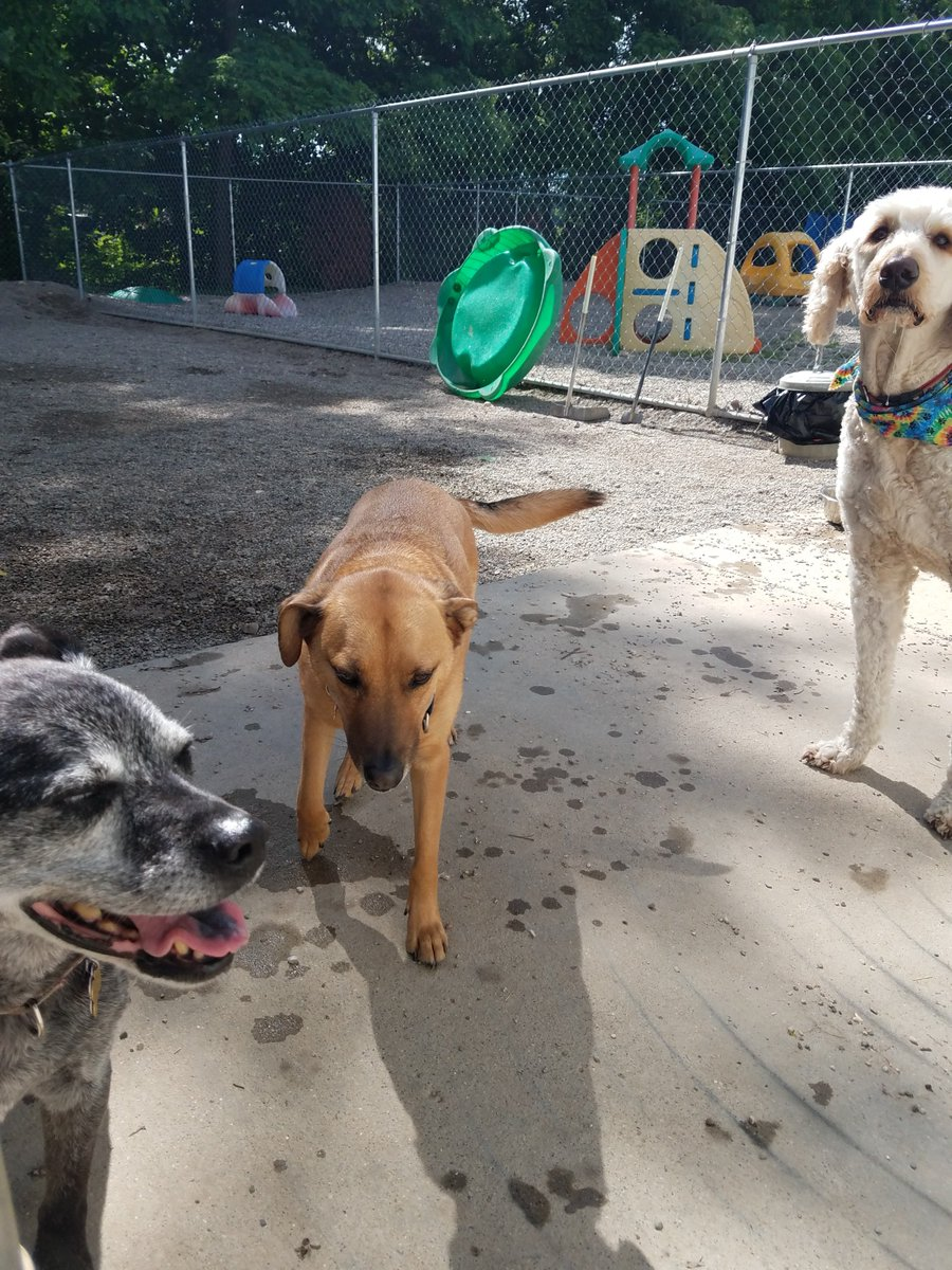 Missy, Dega and Remington are the perfect group of friends.