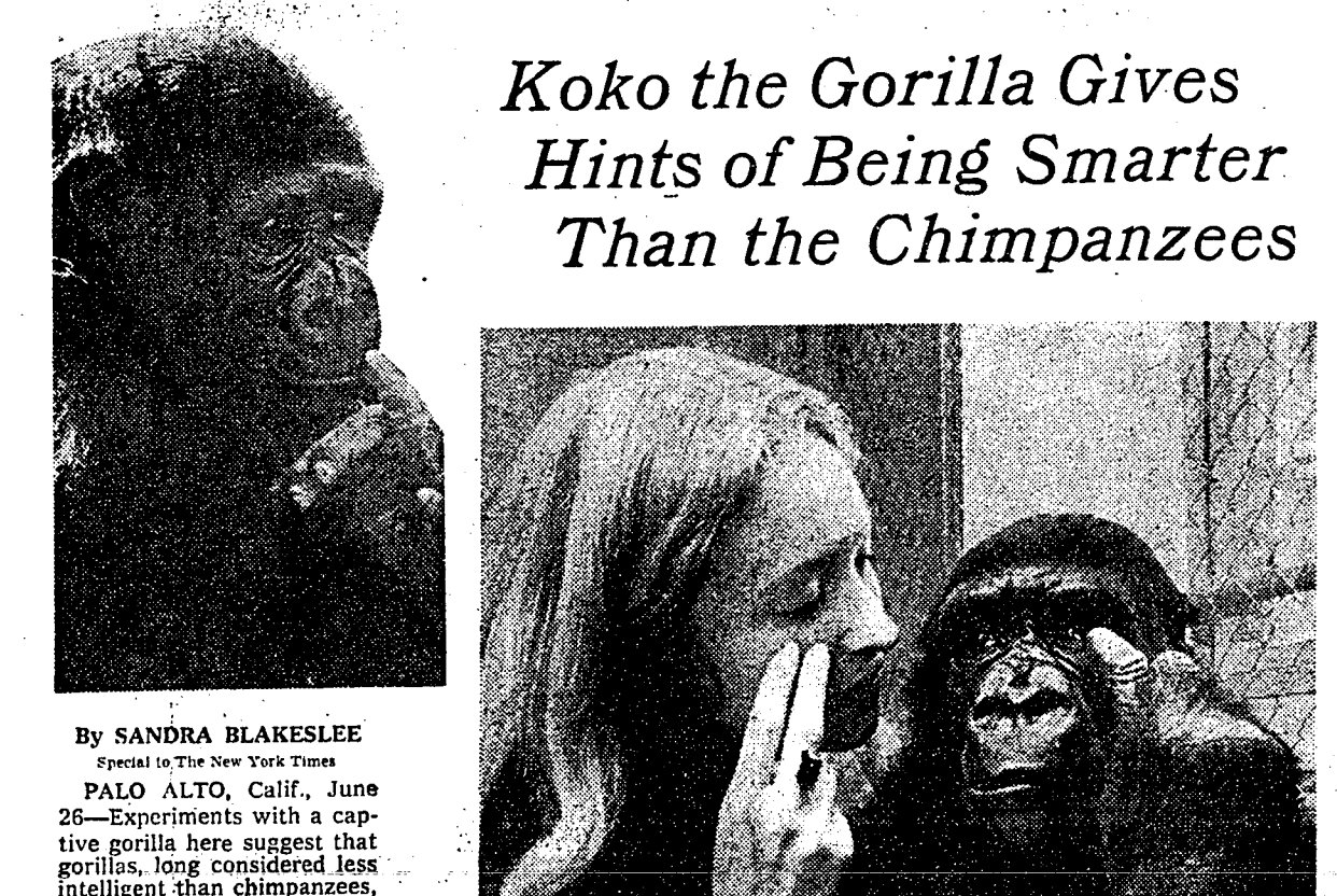 A look back at Koko the Gorilla from @nytimes in 1975. https://t.co/0uPFvm9zs2 https://t.co/JKo5vIdkoi