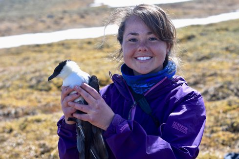Our last blog gave an update on field work were doing focused on tracking Long-tailed Jaegers. Our partner, @wayfaringwilly an avian ecologist at @DenaliNPS wrote a guest post sharing more info on the bird itself. #ornithology #migconnectivity migratoryconnectivityproject.org/long-tailed-ja…