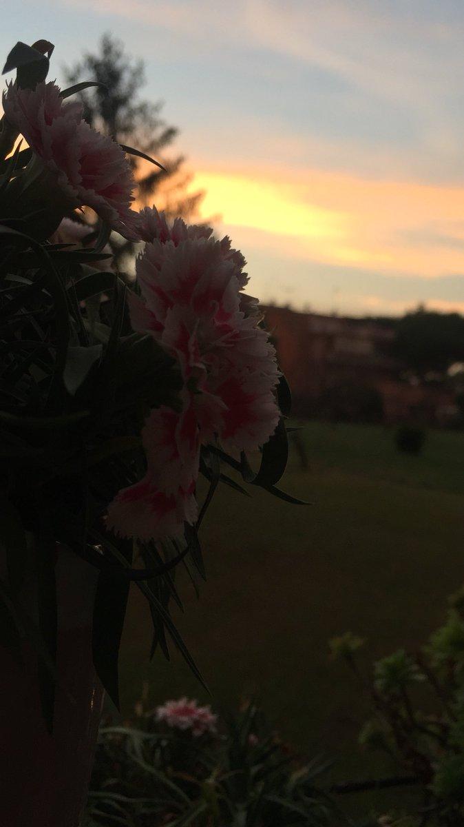 Il #Solstizio è stato di parola #21Giugno ci regala un tramonto  incantevole #Romeisus @3BMeteo @BeautyfromItaly @TrastevereRM @f_girasole @claviggi @SaiCheARoma @romewise  - Ukustom