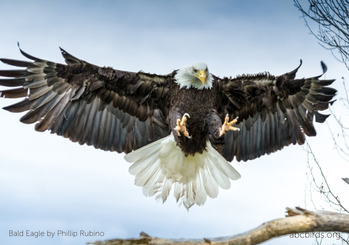 Carbofuran, acute toxin no longer sold in the U.S., identified as source of Bald Eagle deaths in Maryland. Via @washingtonpost: buff.ly/2K97OLP #pesticides