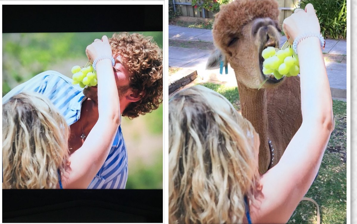 Spot the difference part 2. Feeding the villa alpaca #LoveIsland <br>http://pic.twitter.com/DgTvPvfQXu