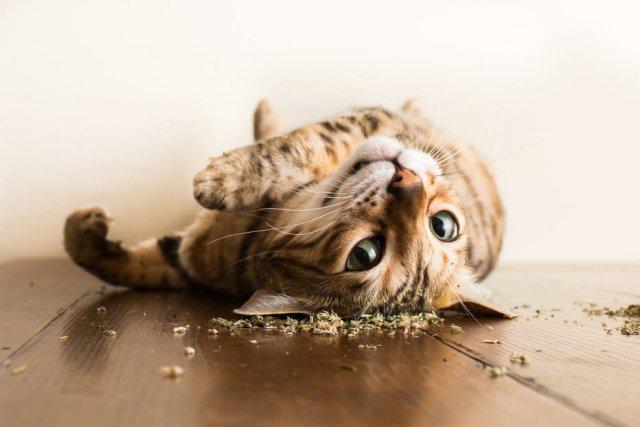 Fotógrafo captura imagens de gatos sob o efeito de 'catnip' https://t.co/B9x3sUcjJb