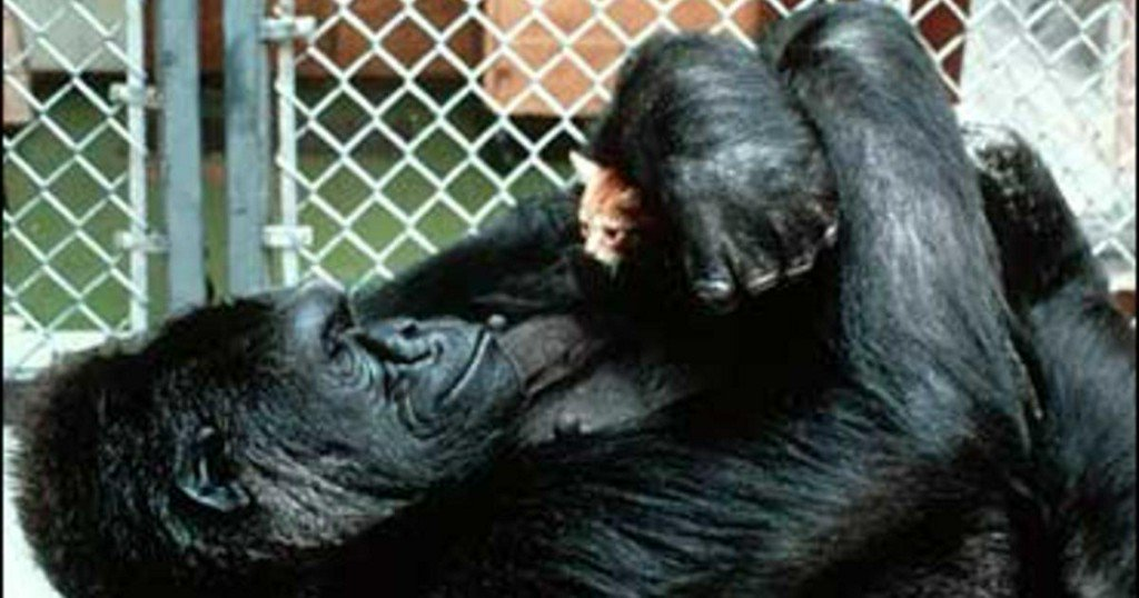 Koko, the gorilla who mastered sign language, dead at 46 https://t.co/Vf7aEqReNR
