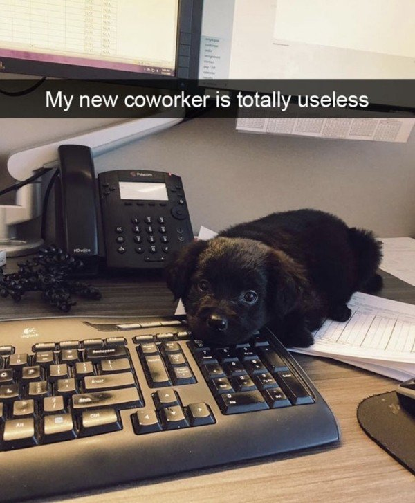 New assistant wanted. Must be proficient in Excel and not poop in the office. 😉 #TakeYourDogToWorkDay