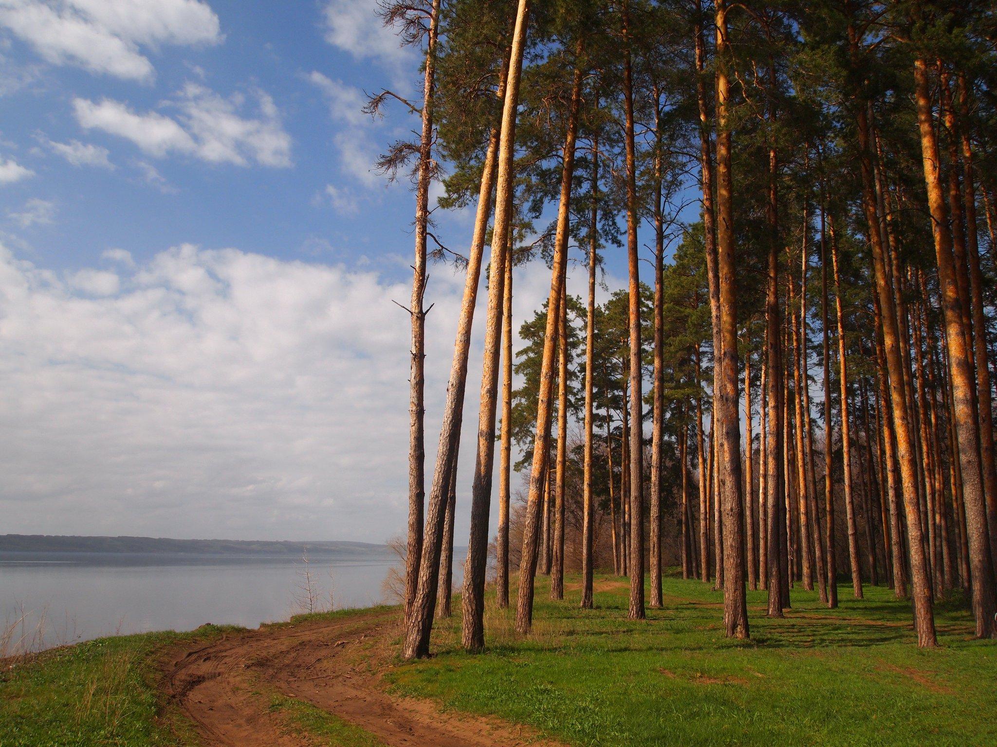 лес самара картинки луки