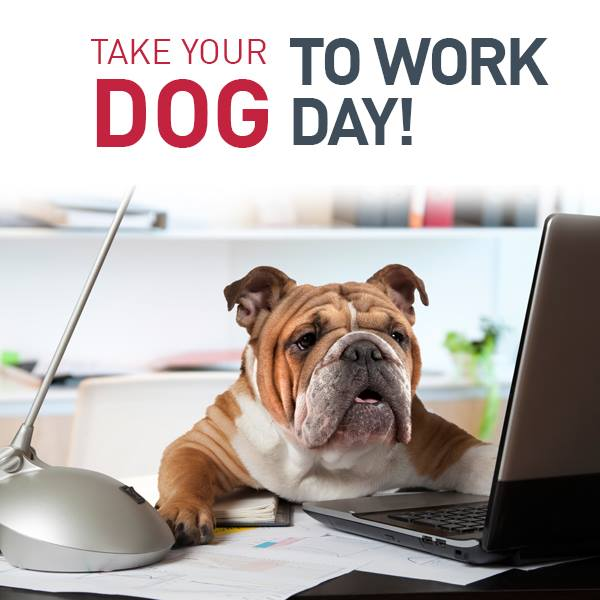 Happy #TakeYourDogToWorkDay! If you&#39;re waking #UPWITHWCNC, boy do we have a very special treat for you this morning! Hint: They&#39;re very very very good  <br>http://pic.twitter.com/iOt1G2LjEl