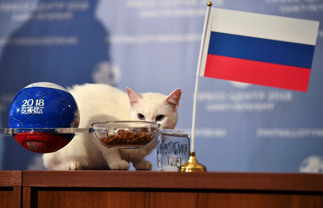 Achilles the Cat, a St. Petersburg native, is turning out to be the official oracle of #WorldCup 2018. Meet more furry fortune tellers here  https://t.co/TuAJtCbXB0