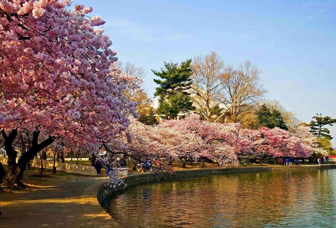Поздравление марта, картинки цветущие сады сакура
