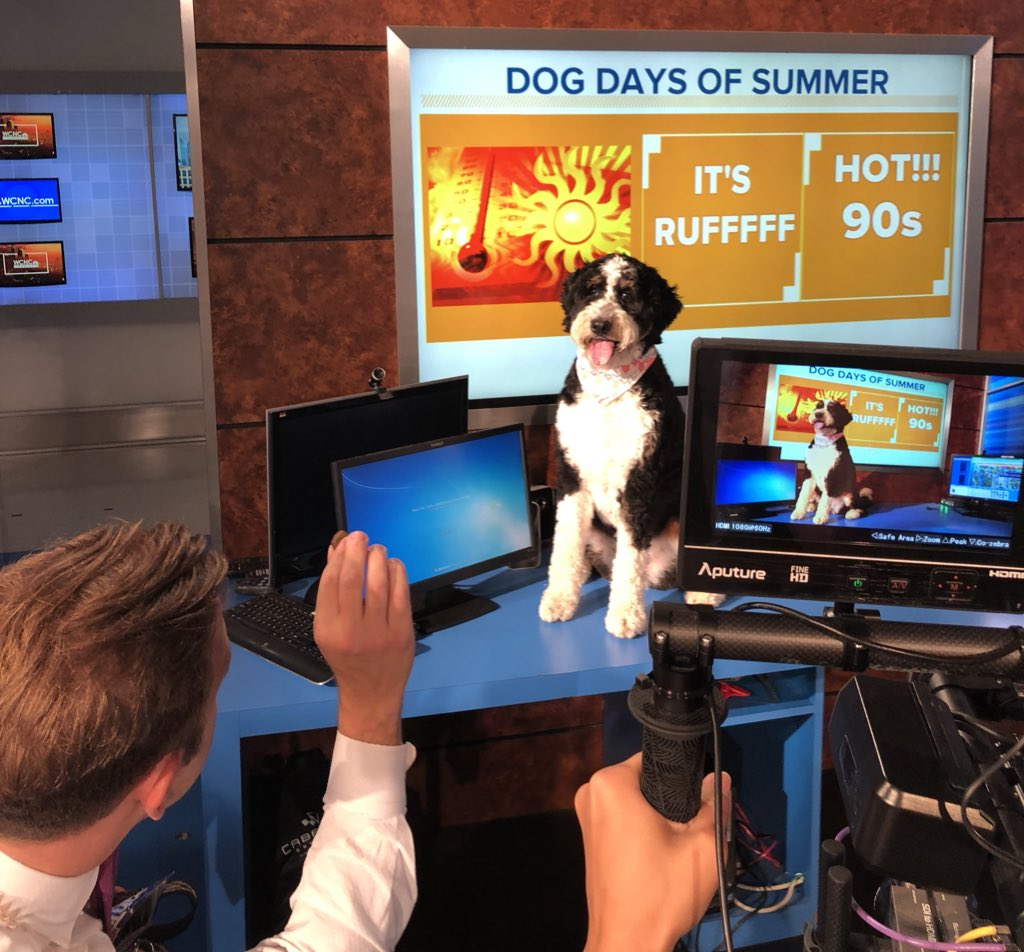 It's Take Your Dog to Work Day!  MeteorPAWlogist Scout Thompson has a look at the First Warn FURcast! Catch her on @wcnc #TakeYourDogToWorkDay #UPWITHWCNC <br>http://pic.twitter.com/1GwRaFUIXP &ndash; à WCNC-TV