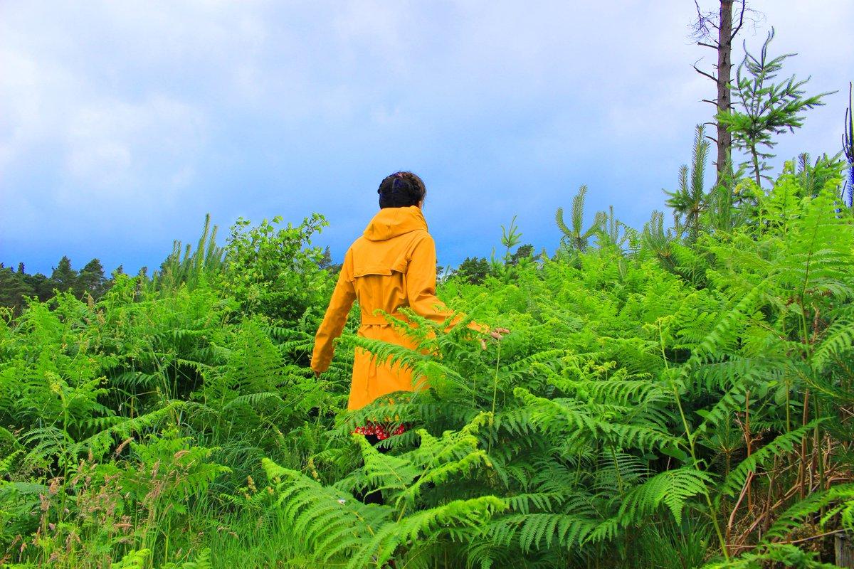 book Эколого флористическая классификация лесов Южного