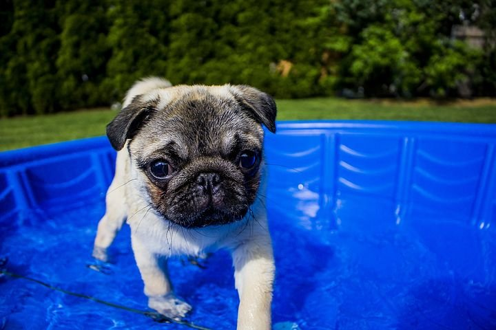 7 Tips to Help Keep Your Dog Cool in the Summer - https://t.co/ifm06GcBga   #wmc5