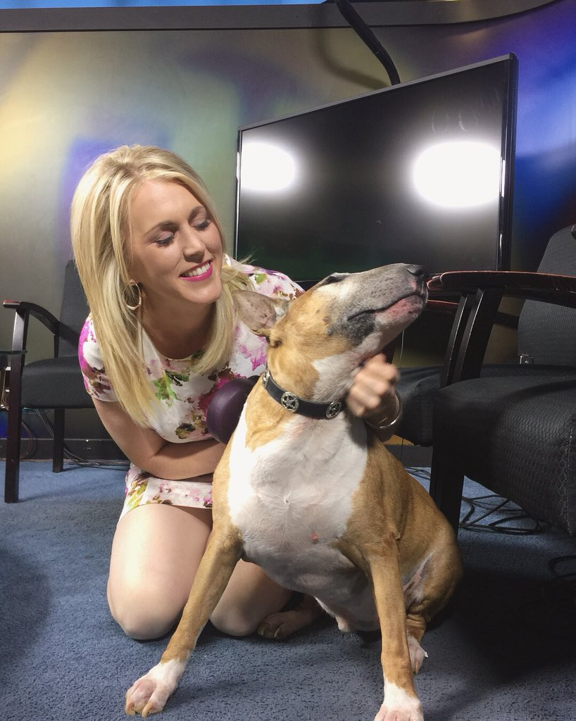 It's #TakeYourPetToWorkDay so guess what I did...??? Meet my old pup Bonsai!! #GoodBoy #BullTerrier #BullTerriersOfInstagram #OldDogs #Love #MyFurBaby #Friday #Morning #FridayFeels @KGETnews<br>http://pic.twitter.com/cMsm2kgtUK