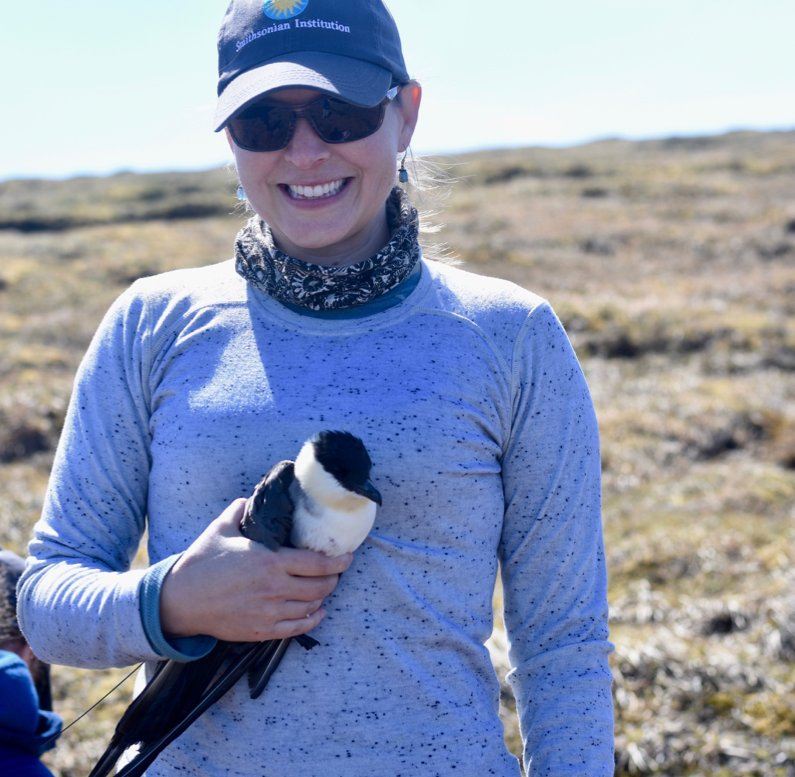Our efforts in @DenaliNPS have been rewarded w a total of 6 tagged Long-Tailed Jaegers, which can now be tracked for the rest of the year. Learn more about the process of getting tags on these birds in the latest Field Blog! #ornithology #MigConnectivity migratoryconnectivityproject.org/denali-seabird…
